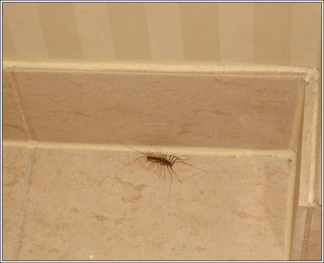 Icky_big_ass_bug