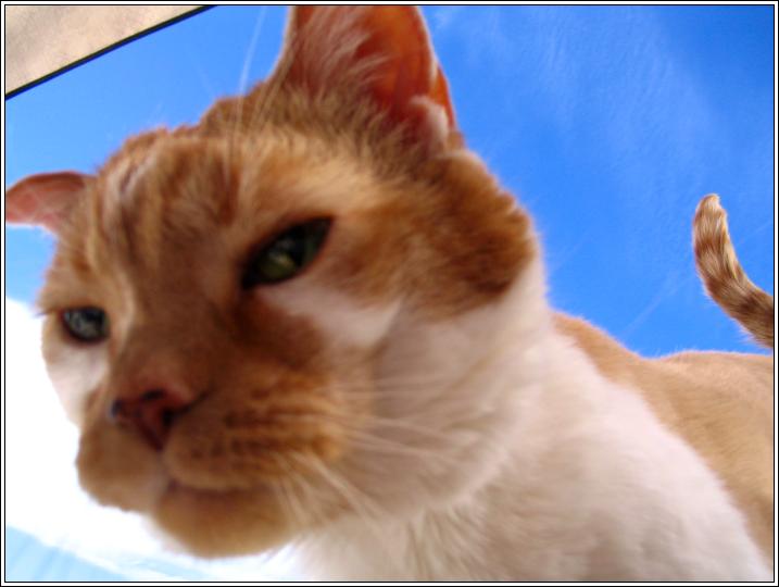 Kitty_cutie_head