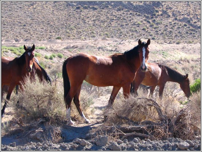 Wild_horses_b_7_4_07