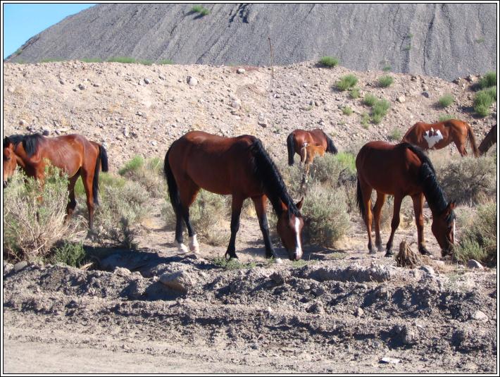 Wild_horses_c_7_4_07
