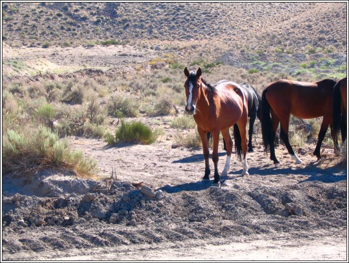 Wild_horses_d_7_4_07