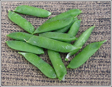First_peas