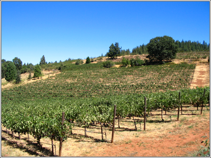 Primus_vineyards_9_2_07