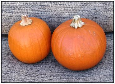 Pumpkins_yum_yum
