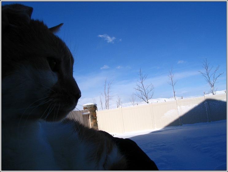 Tkk_snow_1508
