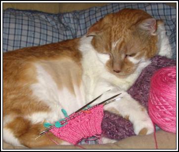 Kitty_sock2_1