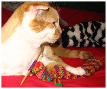 Kitty_sock3
