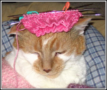 Kitty_sock3_1