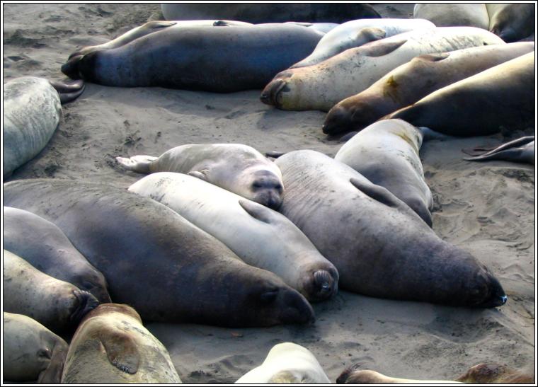 Seal_faces_05