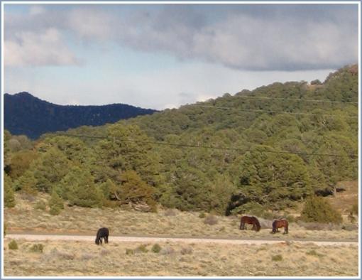 Wildhorses2